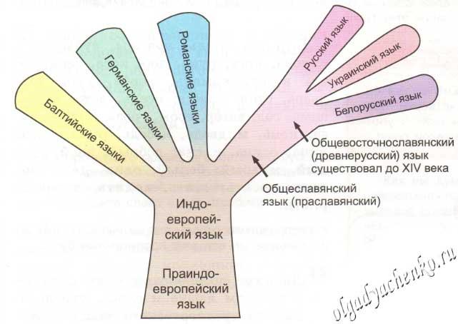 «дерево» индоевропейской семьи языков